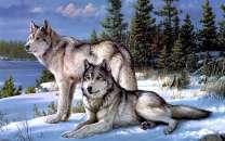 Картина по номерам 30x40  Волки в снегу