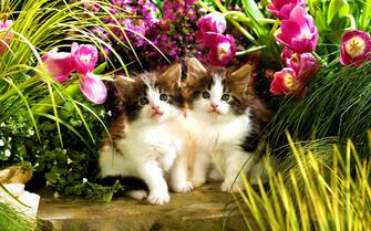Картина по номерам 40x50 Очаровательные котята