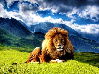 Картина по номерам 40x50 Угрюмый лев