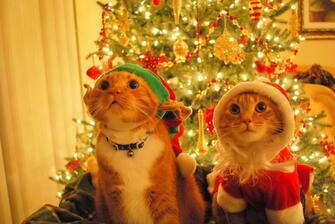 Картина по номерам 40x50 Новогодние котики