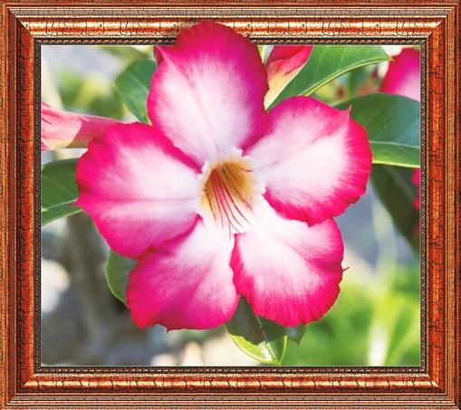 Алмазная мозаика 3D 40x50 Цветок адениум