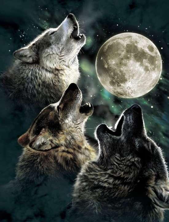 Картина по номерам 40x50 Волчьи песни в полнолуние