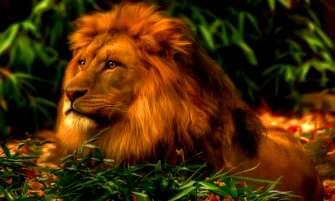 Картина по номерам 40x50 Царь зверей