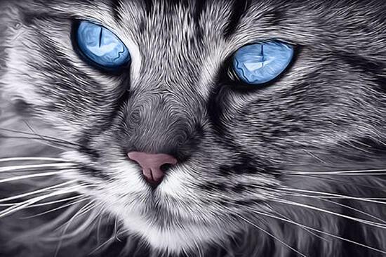 Алмазная мозаика 20x30 Пушистая кошка с голубыми глазами