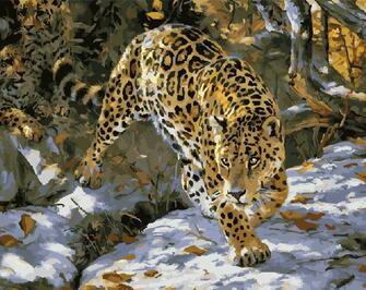 Картина по номерам 40x50 Леопард на снегу