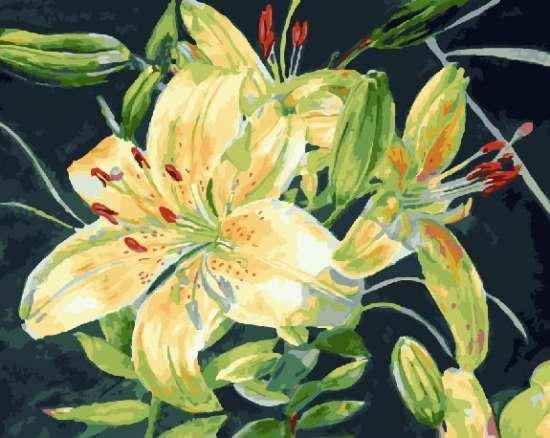 Картина по номерам 40x50 Королевские белые лилии