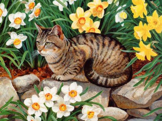 Картина по номерам 40x50 Кошка в саду с цветами