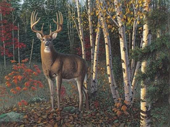 Картина по номерам 40x50 Олень с красивый рогами