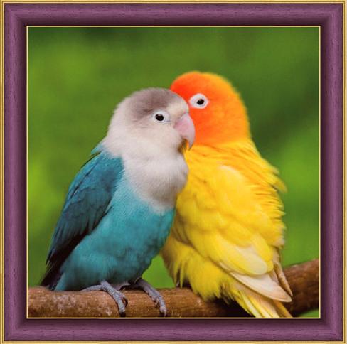 Алмазная мозаика 30x30 Оранжевый и синий попугаи