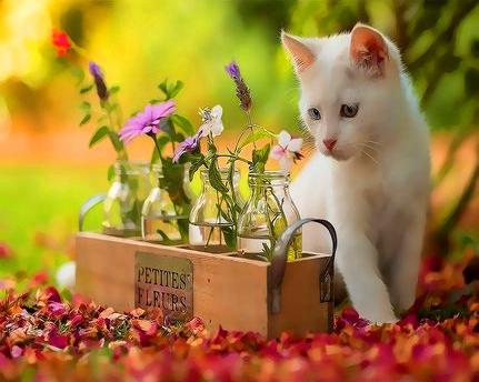 Картина по номерам 50x65 Любопытный белый котёнок