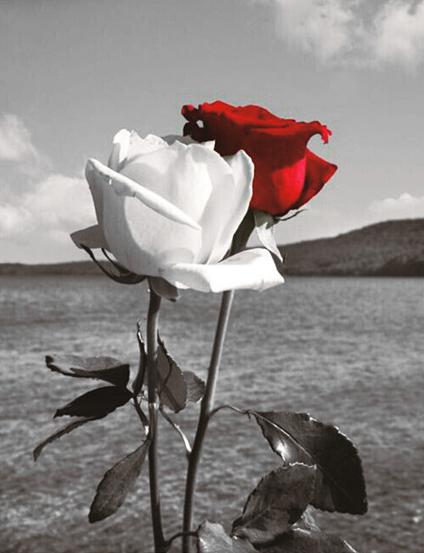 Алмазная вышивка 40х50 квадратная Розы на черно-белом фоне