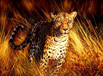 Картина по номерам 40x50 Самый быстрый гепард