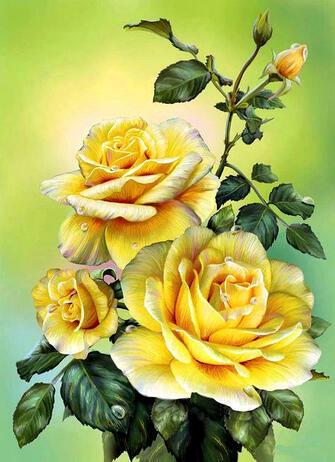 Картина по номерам 40x50 Солнечные розы