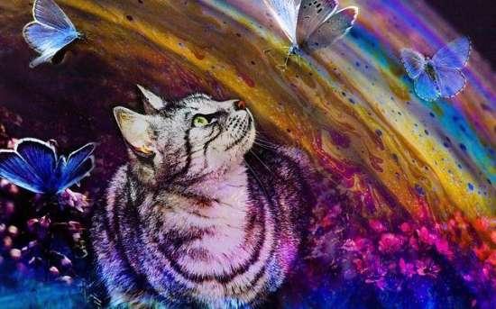 Картина по номерам 40x50 Кошка играет с бабочками