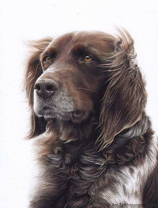 Картина по номерам 40x50 Добрый пёс