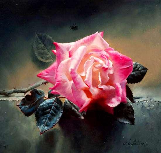Картина по номерам 40x50 Одинокая роза на земле