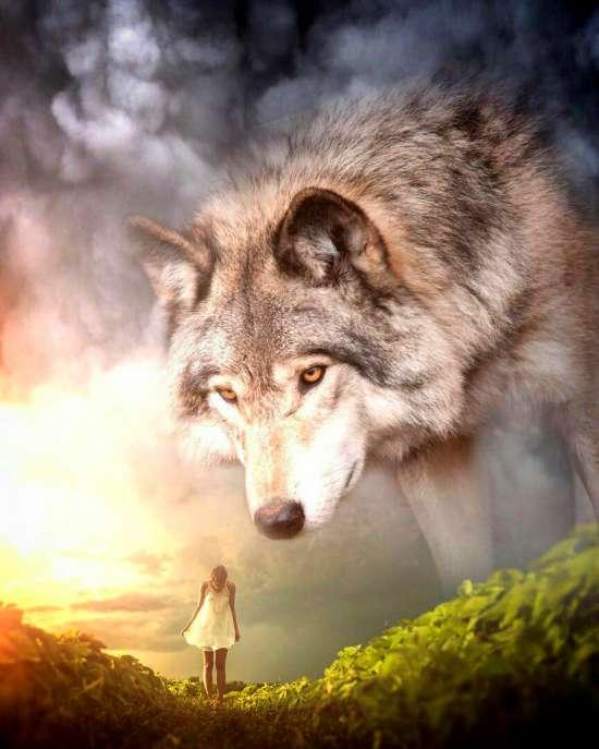 Картина по номерам 40x50 Общение с духом Волка