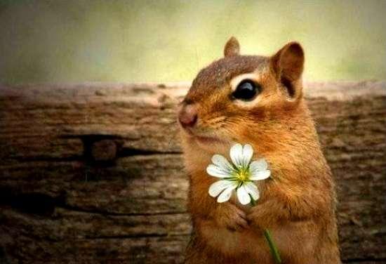 Картина по номерам 40x50 Суслик с цветочком