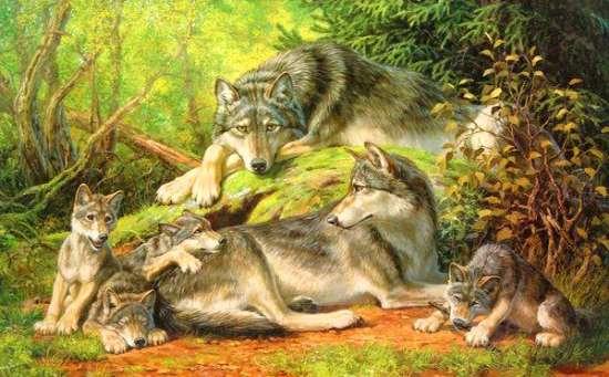 Картина по номерам 40x50 Волчья семья в густом лесу