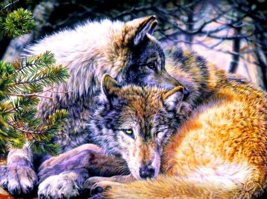 Картина по номерам 40x50 Волк и волчица на отдыхе
