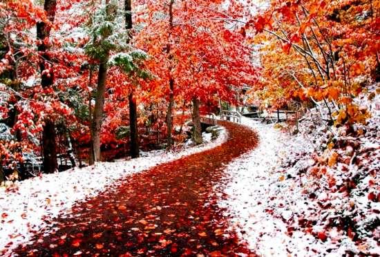 Алмазная мозаика 40x50 Первый снег в осеннем парке