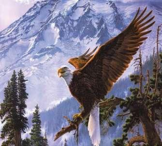 Алмазная мозаика 40x50 Горный орел на ветке сосны