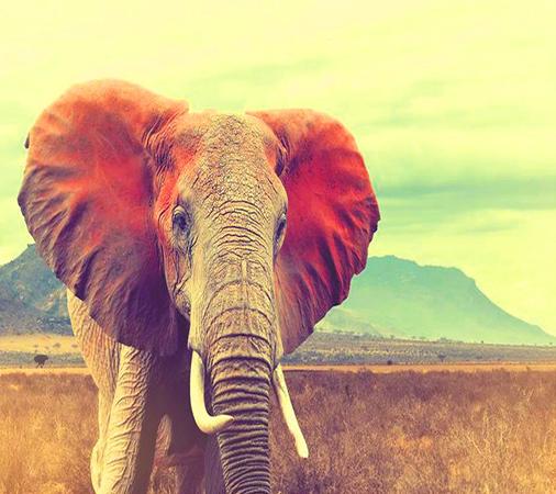 Алмазная мозаика 40x50 Большой слон на фоне горы