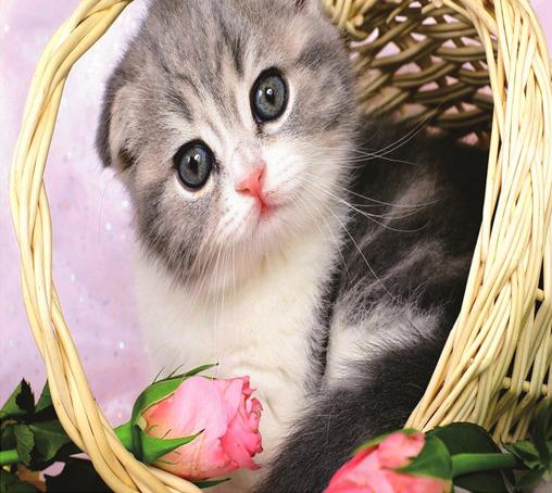 Алмазная мозаика 40x50 Полосатый котенок и розы