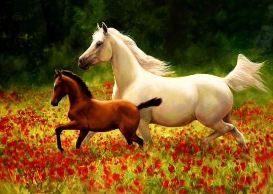 Алмазная мозаика 40x50 Белая лошадь и ее малыш среди маков