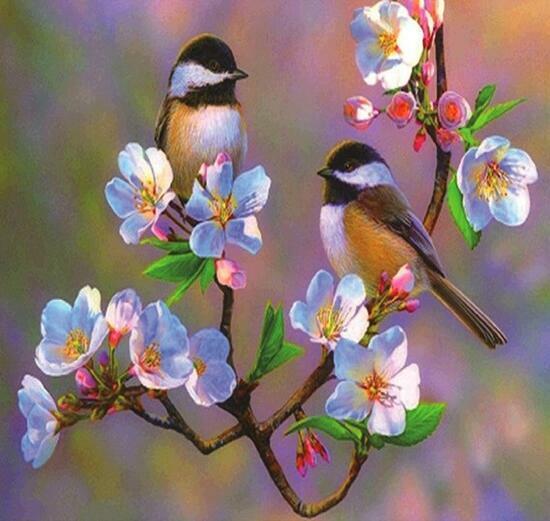 Алмазная мозаика 40x50 Воробушки на цветущей вишне