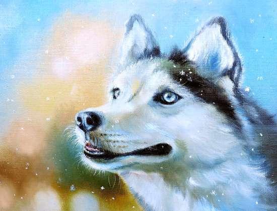 Картина по номерам 40x50 Любопытный хаски под снегом