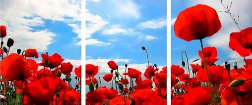 Триптих по номерам 40x50x3 Голубое небо и красные маки