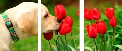 Триптих по номерам 40x50x3 Щенок нюхает тюльпаны