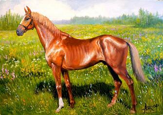 Картина по номерам 40x50 Американская верховая лошадь