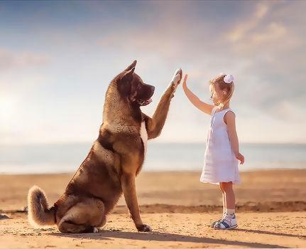 Картина по номерам 40x50 Девочка и большой пес