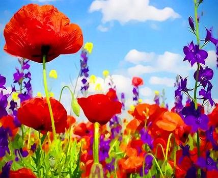 Картина по номерам 40x50 Красота полевых цветов