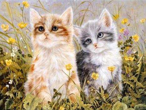 Алмазная мозаика 40x50 Милые котята на лугу