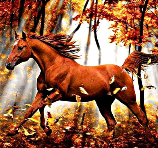 Алмазная мозаика 40x50 Галоп лошади по осенней листве