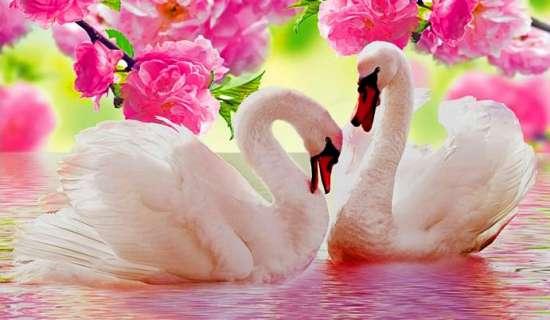 Алмазная мозаика 20х30 Два лебедя под розовыми цветами