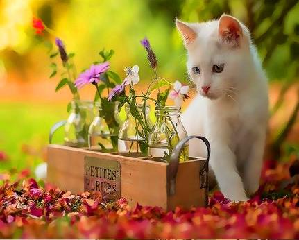 Картина по номерам 30x40 Любопытный белый котенок и цветочки
