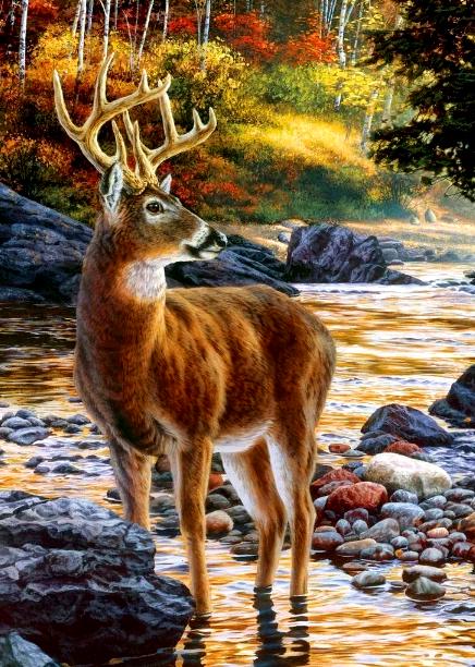 Картина по номерам 40x50 Благородный олень на реке