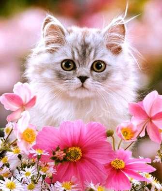 Купить пушистый котенок среди нежных цветов за 890 руб. в Москве