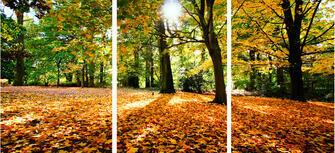 Триптих по номерам 40x50x3 Осенний лесной пейзаж