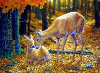 Вышивка крестиком Молодые олени в осеннем лесу
